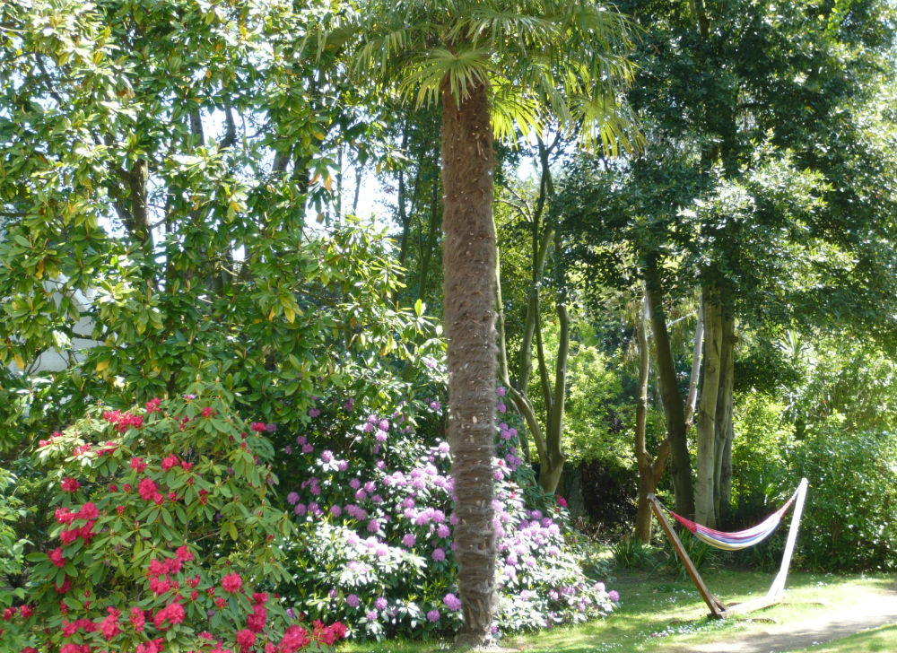 Le jardin de la Villa Saint Raphael hamac